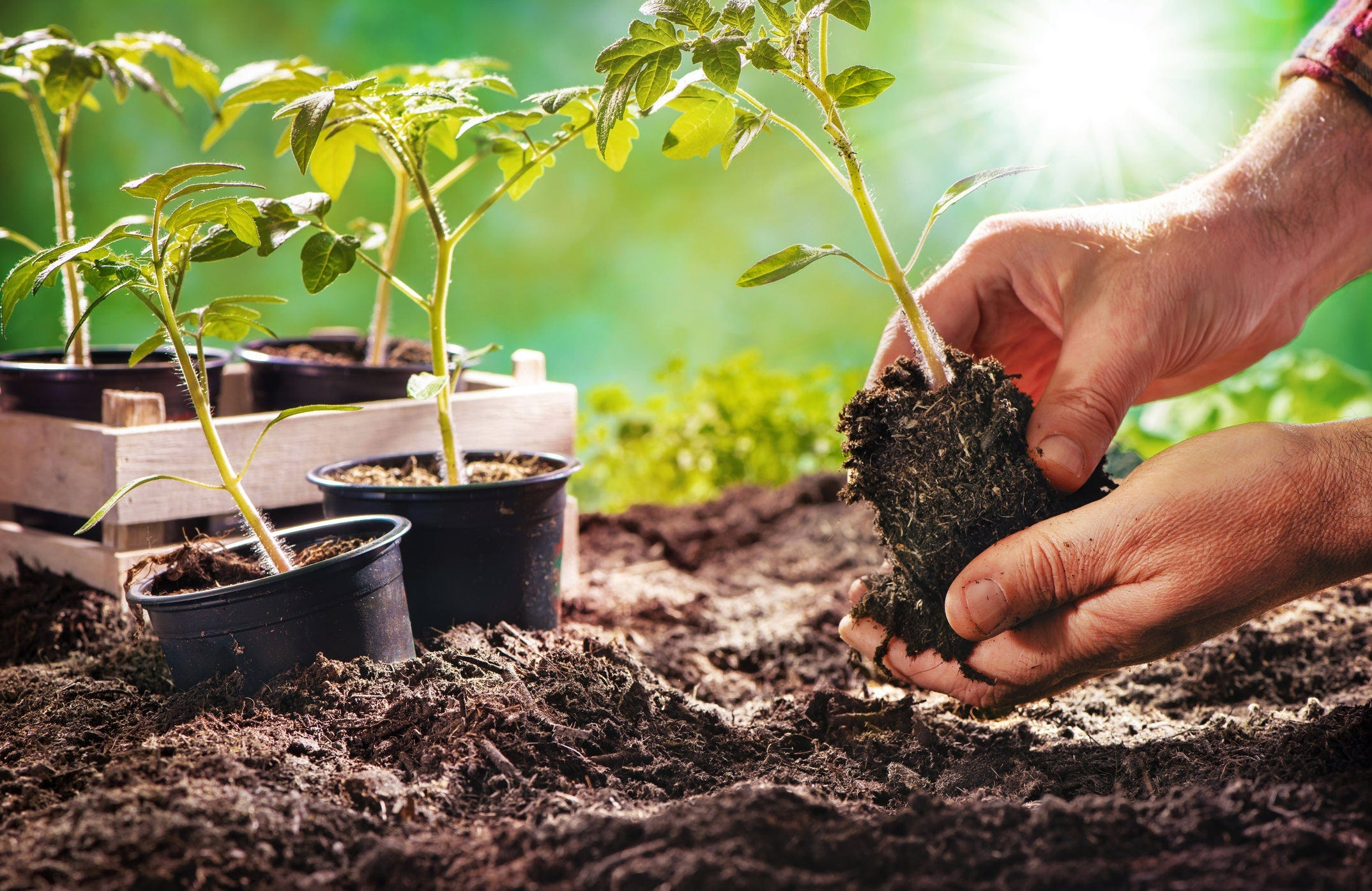 Develop Your Green Thumb By Planting a Garden