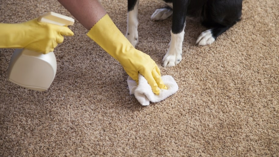 Clean Your Carpets Regularly1