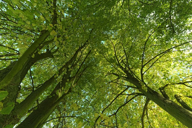 Creating a healthy environment with trees