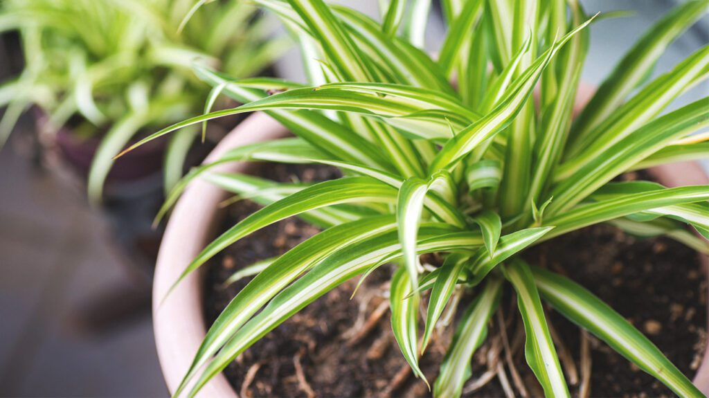 Air-Purifying Plants1