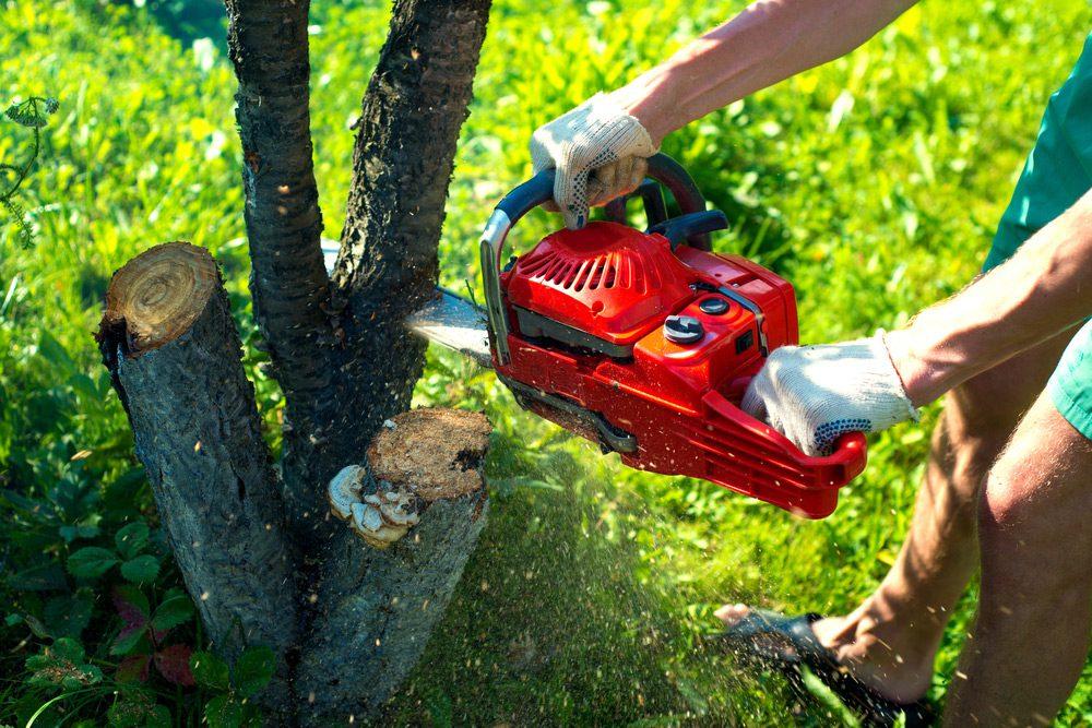 Tree Service2