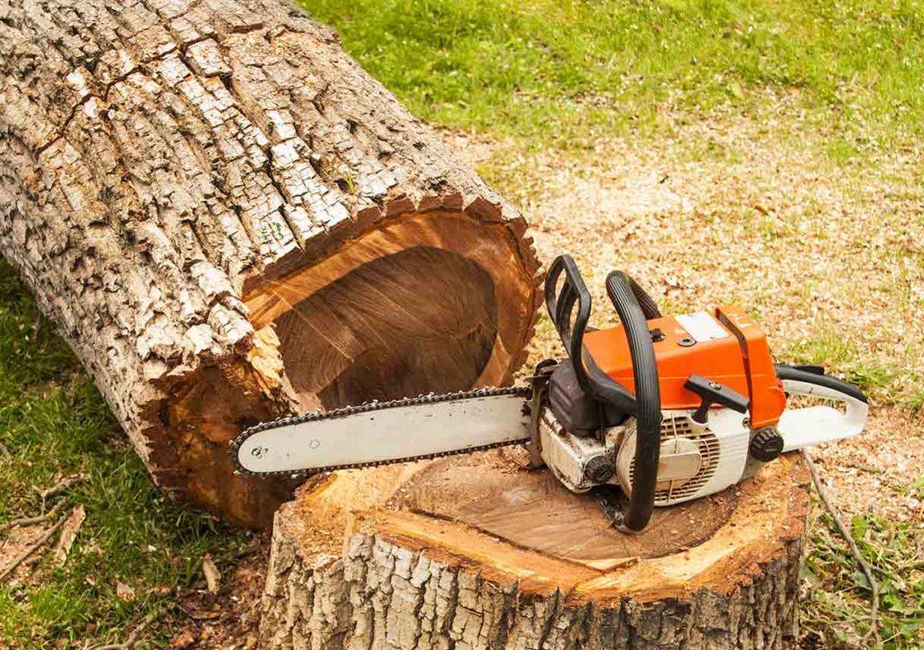 Tree Services2