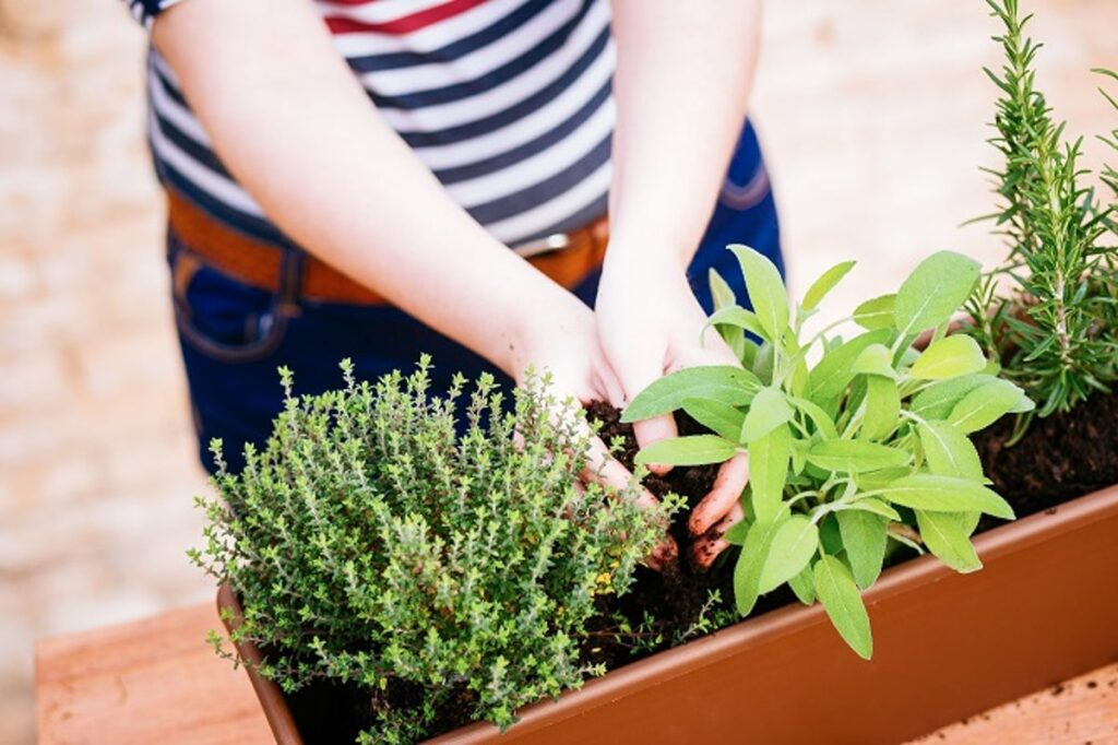 Plant herbs and flowers