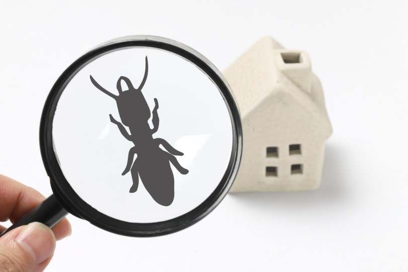 Eliminating Pests & Bugs from the Family Home3