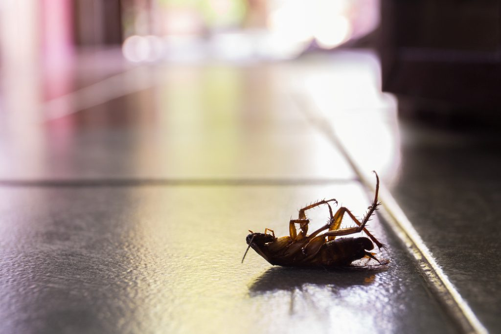 Eliminating Pests & Bugs from the Family Home2