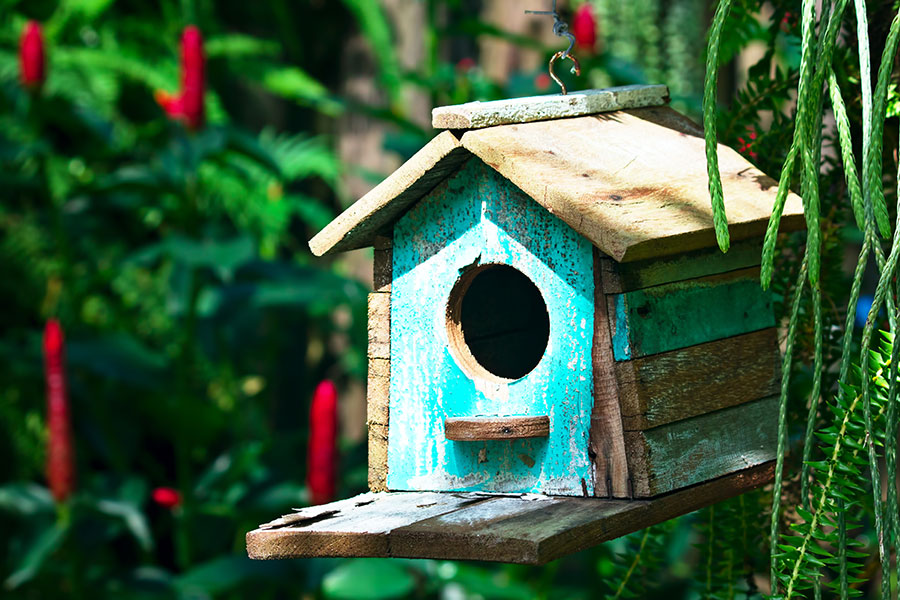 Birdhouse for your backyard3