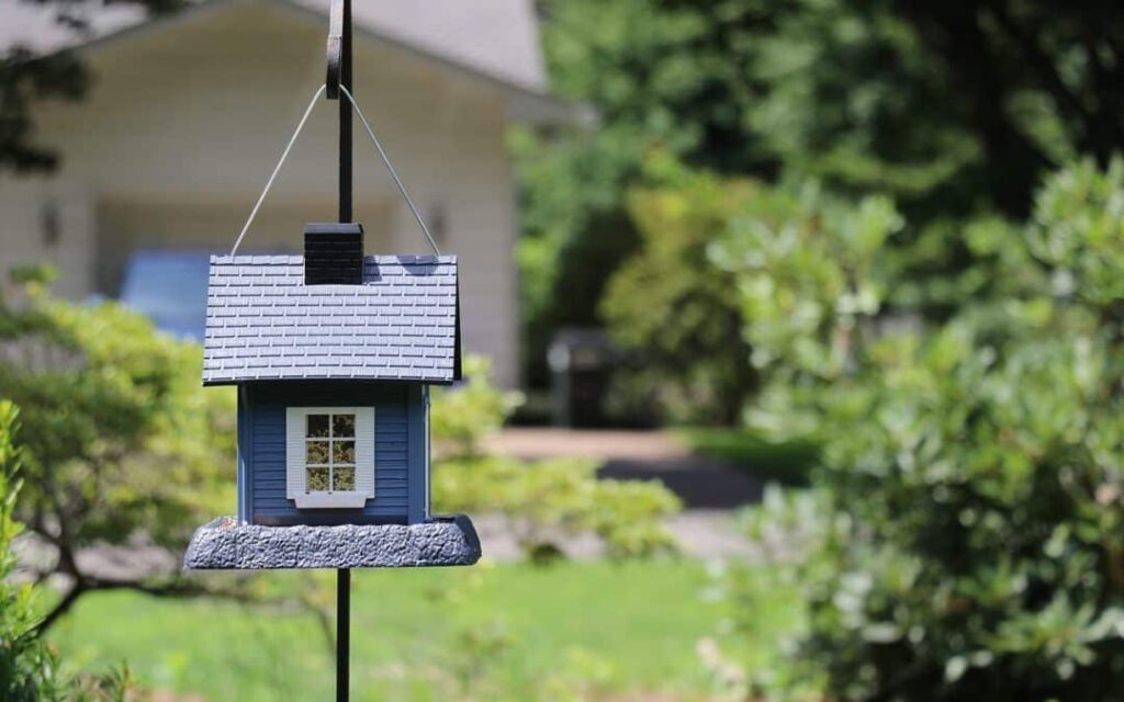Birdhouse for your backyard1
