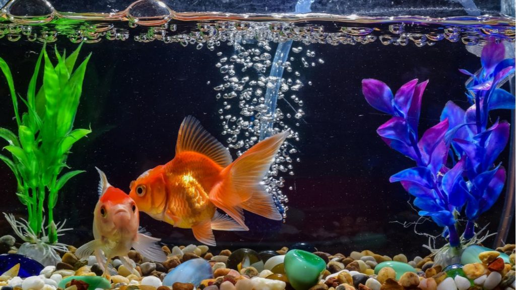 Fish Tank Decorations2
