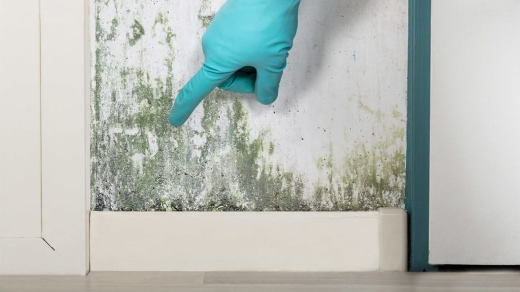 Mold and Damp Problems3