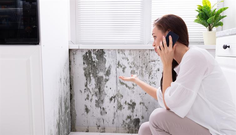 Mold and Damp Problems2