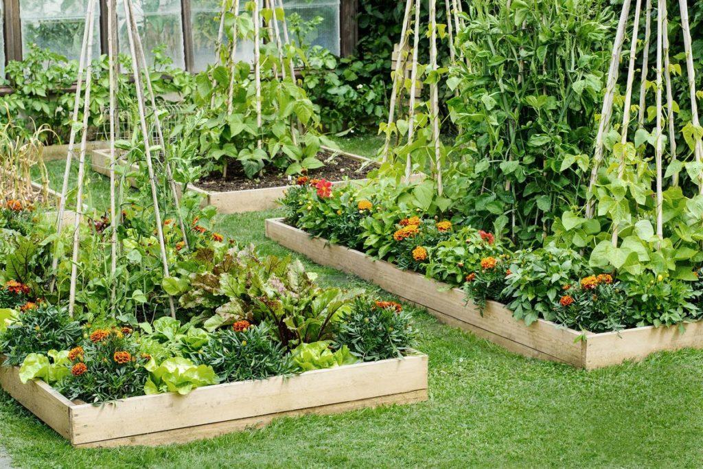 Raised Garden Bed1