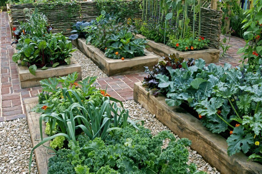 Childrens edible vegetable garden in raised beds